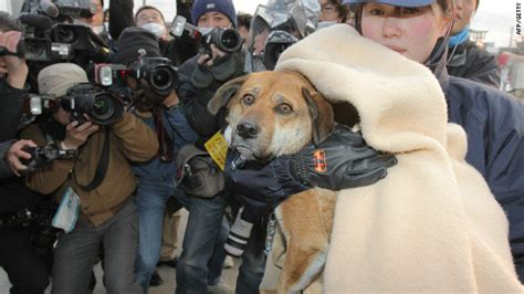 out of the dog house rescue dog rescued after quake going back to its owner cnn com