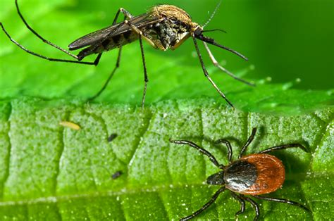 mosquitoes in backyard not to be missed the summer of 2015 will it be a hot