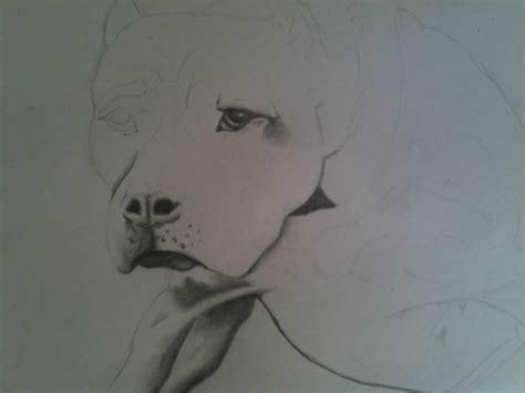 dibujos realistas en lapiz dibujo realista de american pitbull perro p a lapiz