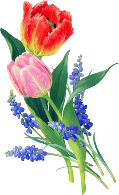 imagenes de rosas sin fondo devike design png tulip 225 nok