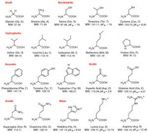 Amino acids matznerd