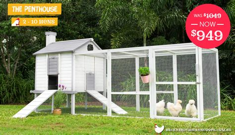 buy chicken house luxury chicken coop simple reinventing the chicken coop original designs with