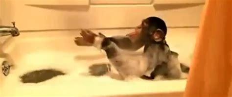 Monkey In Bathtub by Baby Monkey Azadeh Khorram S Website