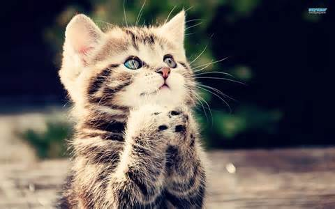 <strong>Kittens</strong>-3-animals-34865509-1680-1050.jpg