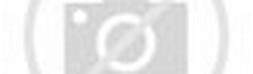 Gambar 5. Struktur jaringan daun dan urat daun Monokotil