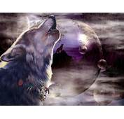 Cool Wolf Backgrounds 11071 Hd Wallpapers In Animals  Imagescicom