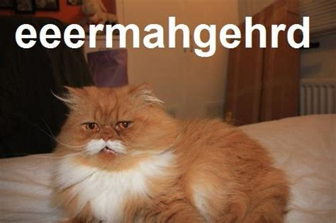 Mustache Cat Meme - oki the moustache cat know your meme