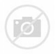 Bunny Tiger Animal