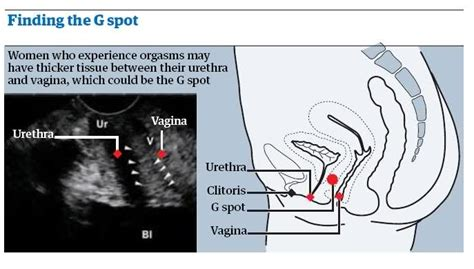 Finding The G Spot the g spot picture the g spot picture scientists find the