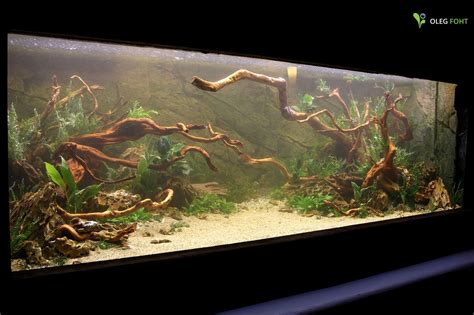 American Aquascapes by 1000 Images About South American Biotope On