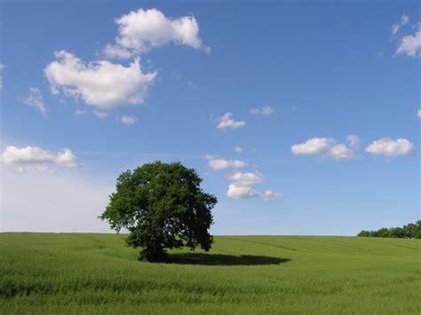 Innenreinigung Auto M Nster by Geruchsneutralisation Ozon