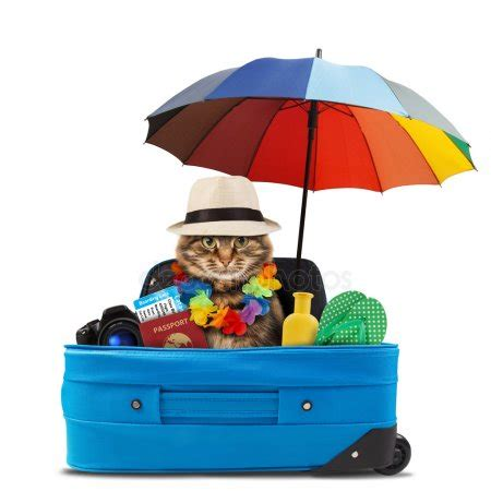 funny cat going on vacation — stock photo © funny_cats