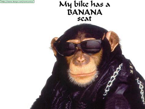 imagenes comicas de monos monos graciosos taringa