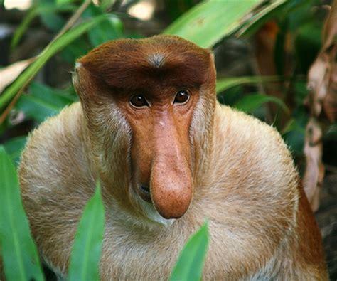 imagenes raras de animales animales raros del mundo