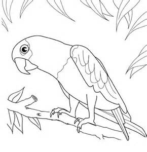 Macaw Coloring Pages
