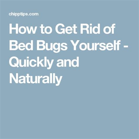 how to get rid of bed bugs naturally pinterest the world s catalog of ideas
