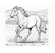 Horse Coloring Pictures  Printable Pages