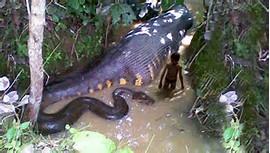 Largest World Biggest Snake Ever