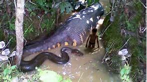 Snake Biggest Anaconda Ever Found