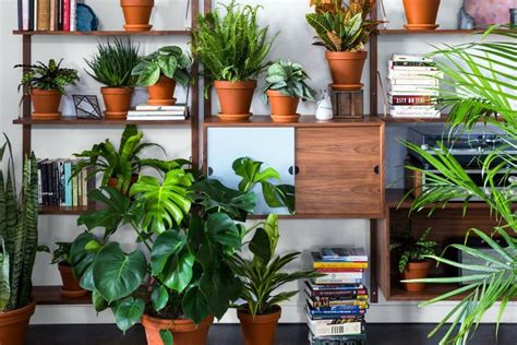 xconomy startup bloomscape aims   urban houseplant delivery blossom