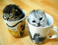 Cute Kittens in Cups