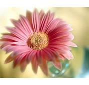 Beautiful Flowers Wallpaper For Desktop Amp Mobile In High Resolution