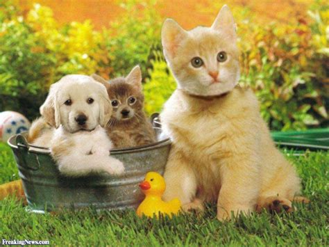 the about cats and dogs cats and dogs pictures