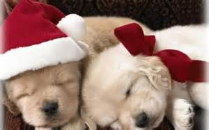 Puppies images christmas puppy hd wallpaper and background photos