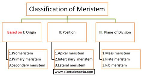 Pattern Classification Meaning | plant meristem definition and classification based on