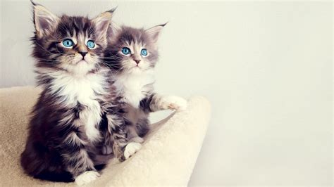 cute kitten desktop wallpaper  images