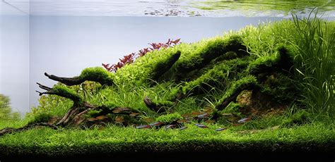 ada aquascape aquascaping contests the all important photo shoot of