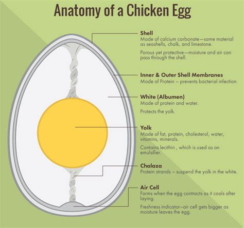 chicken egg diagram eggsposing eggs what labels really for you and the