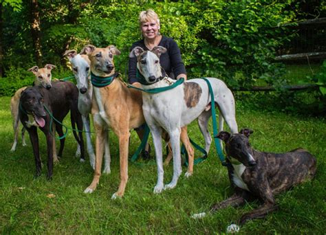 REGAP: Greyhound rescue and adoption from Regap of Connecticut