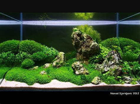 Aquascapes Com Green Mountain Range In The Sea Awesome Aquascapes