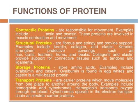 4 protein functions politeknik ibrahim sultan hh514 nutriton