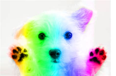 rainbow puppies rainbow puppy by eunhyuk rainbows unicorns and puppies inspiration challenge