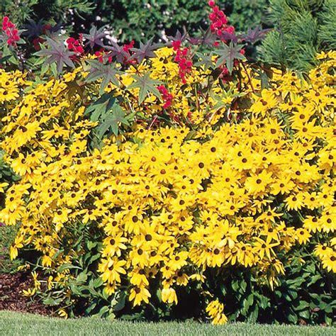 fall perennials my garden life