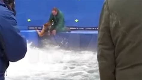 a s purpose abuse shows terrified german shepard forced into waters on set of a s purpose