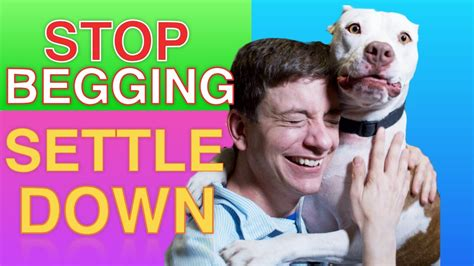 how to your to beg how to teach your to stop begging settle right now funnydog tv