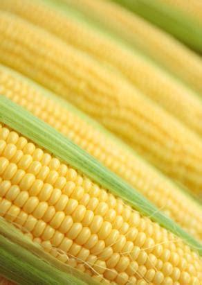 cool pumpkin patch  corn maze dixon ca sep