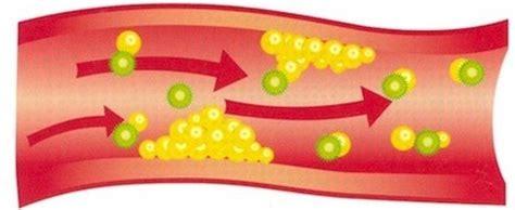 alimenti abbassano il colesterolo e i trigliceridi alimenti per diminuire il colesterolo alimenti