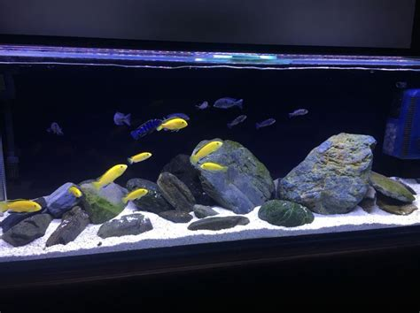 aquascaping african cichlid aquarium 25 best ideas about 4ft fish tank on pinterest pet