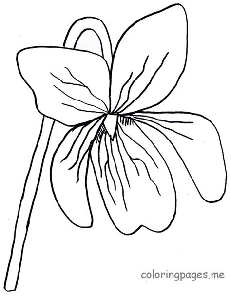 violet flower drawing clipart best