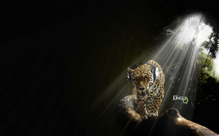 imagenes de jaguar hd jaguar in audio jungle wallpapers hd wallpapers id 10603