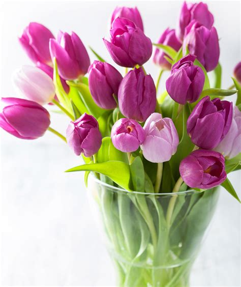 Tulip Artificial By Elie Gallery how to care for tulips real simple