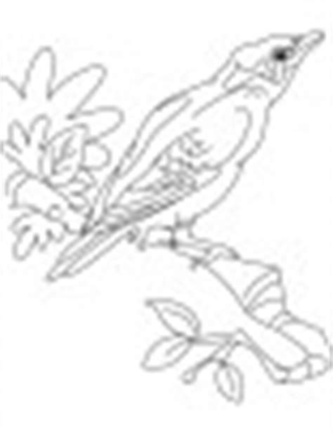 mynah bird coloring page common indian myna sitting on the rock coloring page
