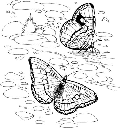 free coloring pages for adults nature coloring pages detailed coloring pages for adults