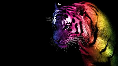 wallpapers of colorful animals cool tiger backgrounds wallpaper cave