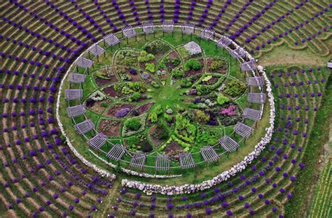 Shelby Michigan Lavender Maze this giant lavender maze in michigan will blow your mind