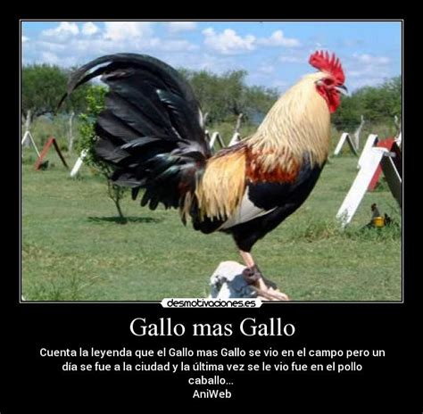 frases para gallos de rias frases de gallos newhairstylesformen2014 com
